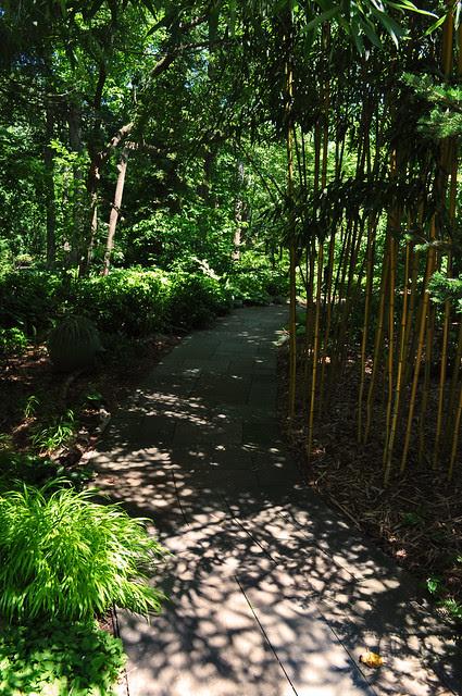 Asian Woods