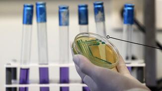 Una científica treballa en un laboratori per aïllar un bacteri (Reuters)