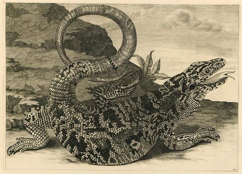 alligator engraving