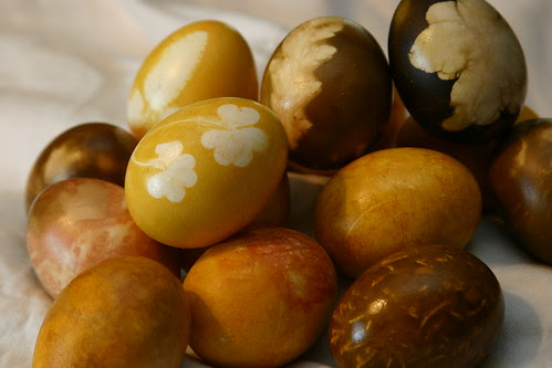 yellow onion eggs