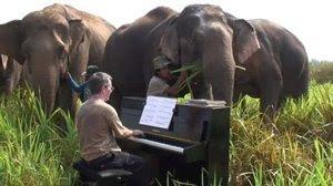 http://www.1jour1sourire.fr/publication/photo/0000/0810/Piano_pour__l_phant.jpg