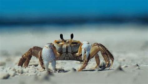 Habitat of the Land Crab   Animals   mom.me