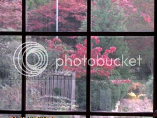 photo autumn2010192.jpg