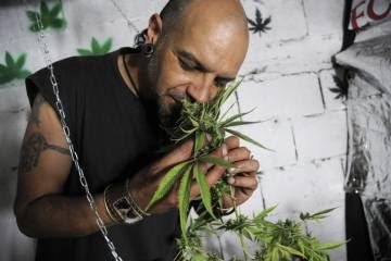 Cultivador de a Red de Usuarios de Drogas y Cultivadores de Cannabis del Uruguay.