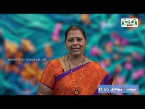 12th Micro Biology வேதியியல் முறையில் நுண்ணுயிரி இயல் 3 Kalvi TV
