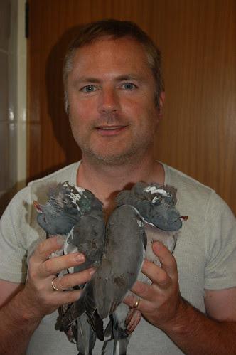 wood pigeons Aug 11 1