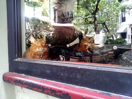 shop kitties