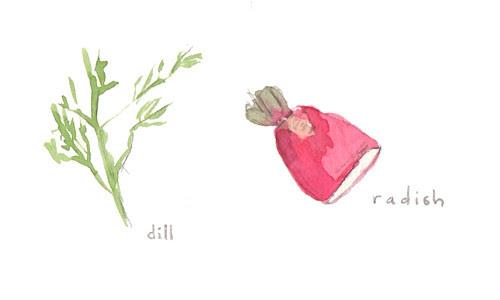 dill and radish