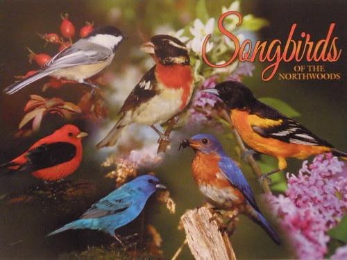 Birds of Minnesota Postcard