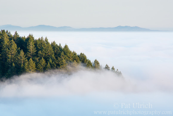 A tree covered peak breaks through the fog in Mount Tamalpais State Park