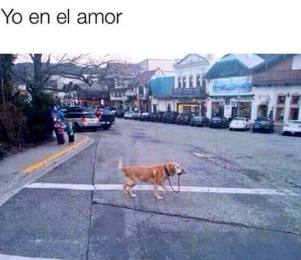 Memes De Yo En El Amor Imagenes Chistosas