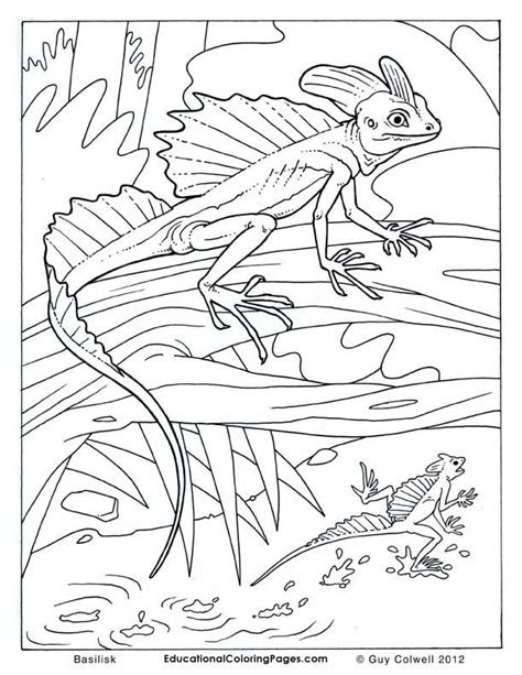 lizard coloring pages lizard colouring pages coloring