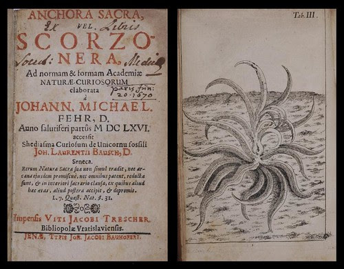 Anchora sacra vel Scorzonera 1666