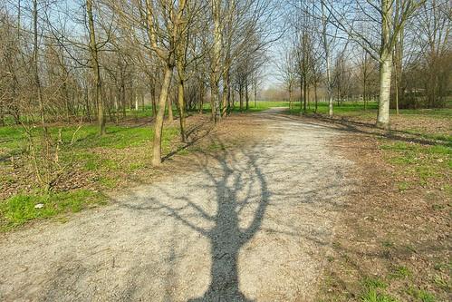 L'ombra di un albero per #Ecoismi2015 by Ylbert Durishti