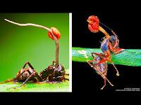 Hayvanları Kukla Gibi Kontrol Eden 6 Korkunç Yaratık - OLUMLU BAK