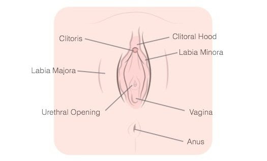 how-to-masturbate-vagina-labeled