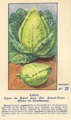 legume22 chou