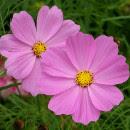 5 plantas fáciles de cultivar desde la semilla para tu huerto o tu jardín