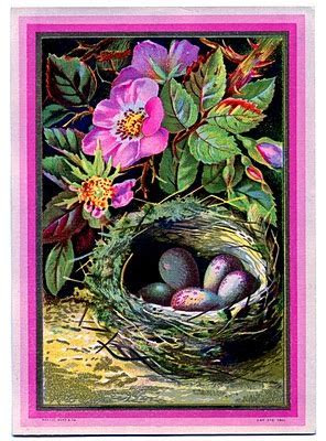 Vintage Clip Art   Nest with Eggs and Pink Roses   The
