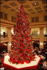 Walnut Root Christmas Tree Panoramic
