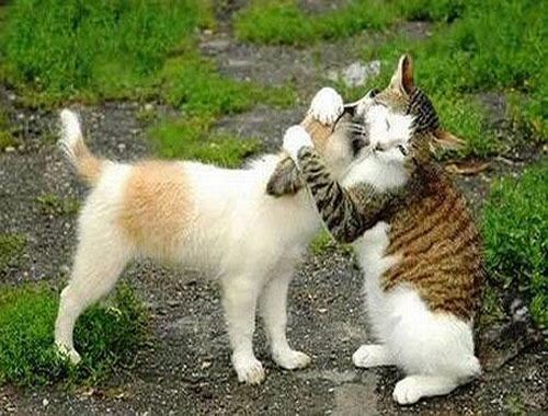 FunnyDogsCats 28 in 40 Funny Pictures of Dogs and Cats