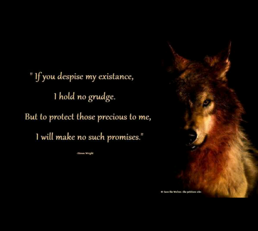 Wolf With Quote Quotes