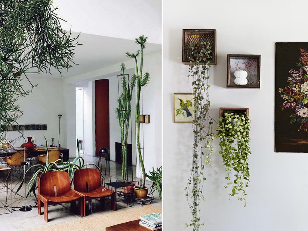 Indoor Plant Inspiration  Collective Gen