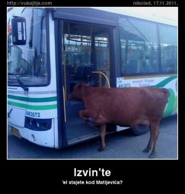Humor Zajebanko Smesne Slike Gratuit   MemeJPG