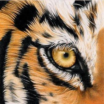Ojo Del Tigre Tigrepedia
