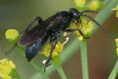 pollinator 077