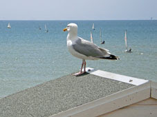 Bexhill seafront, with gull
