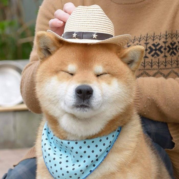 cute-dog-shiba-inu-ryuji-japan-72