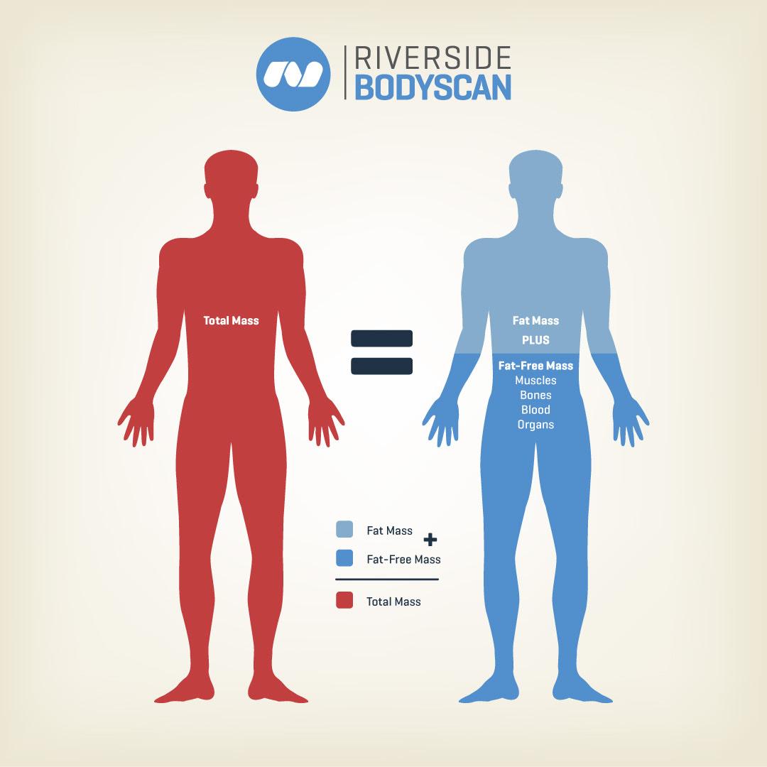 does bmi measure body fat percentage