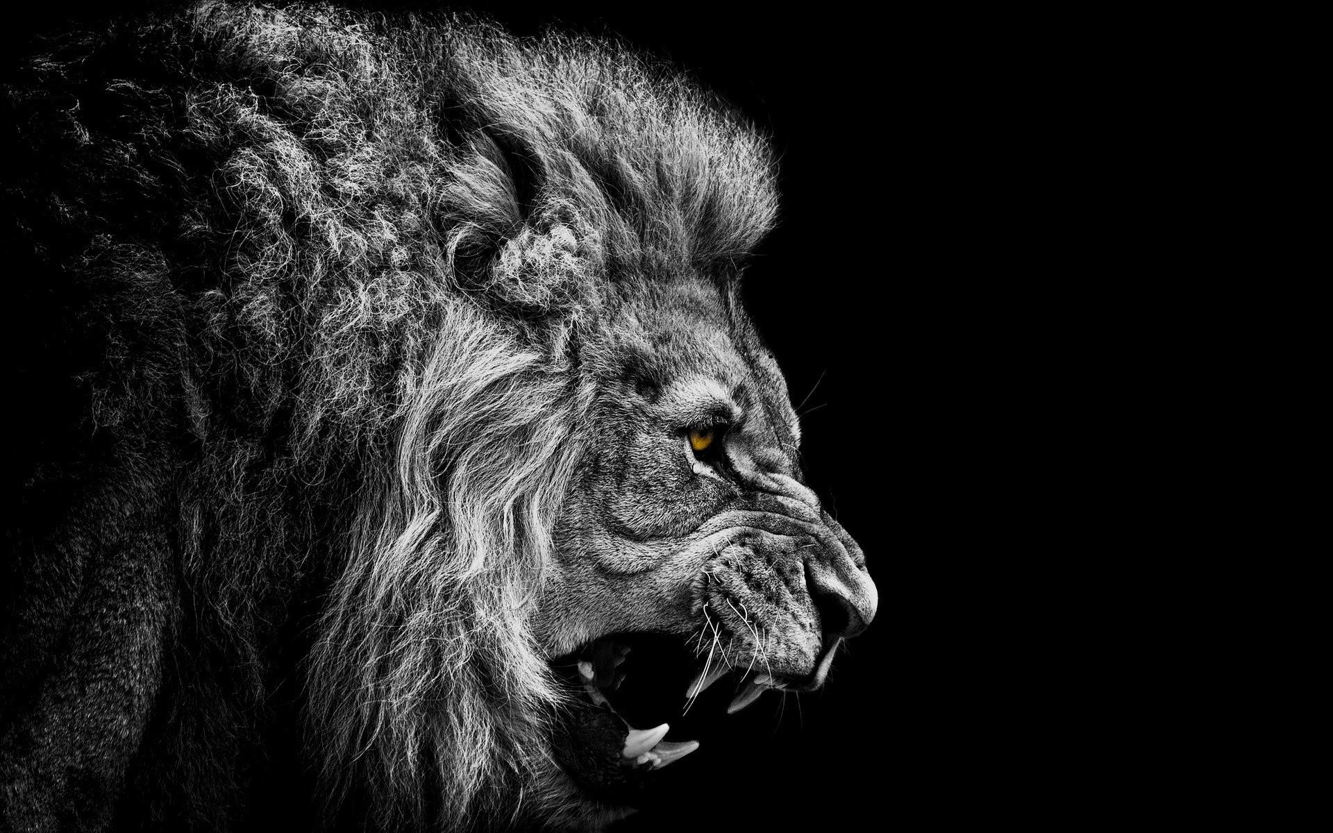lionroarbw
