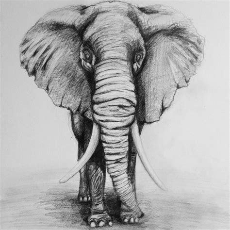 elephant drawing  large images