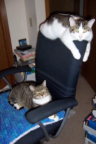 Sharing my Chair