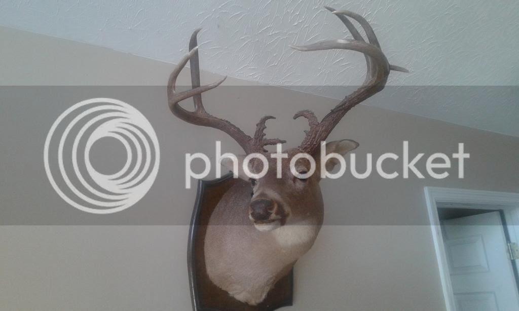 Tndeercom View Topic 150 Deer