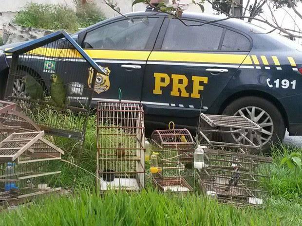 Animais foram flagrados em quintal de residência (Foto: Divulgação/ PRF)