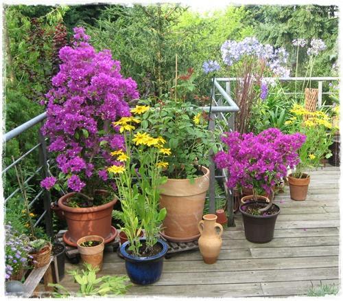 ambitious and combative: pflegeleichte balkonpflanzen, Garten ideen