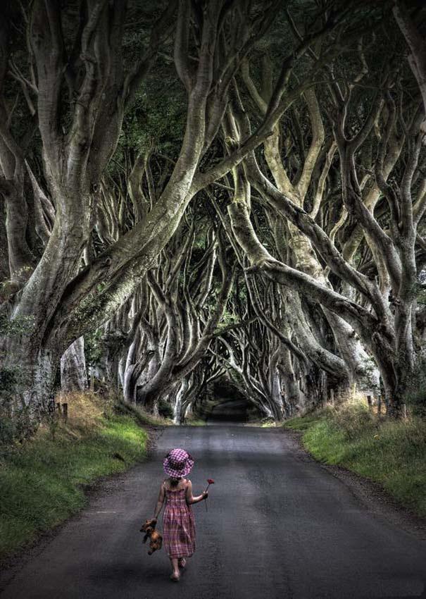 The Dark Hedges: Ένας δρόμος βγαλμένος από παραμύθι (16)