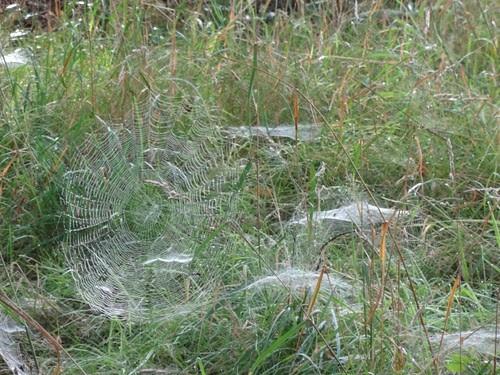 Spinnweben 4