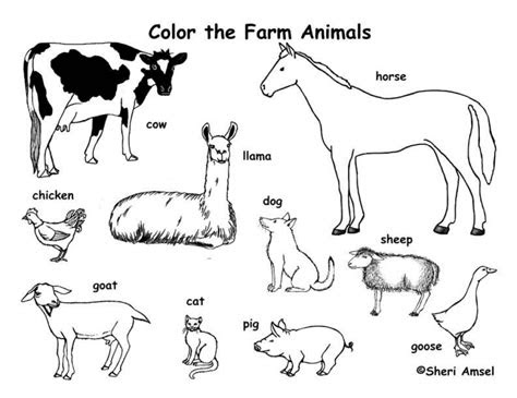 farm animal coloring pages   print jhdb