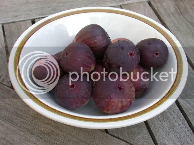 photo bowl_of_figs.jpg