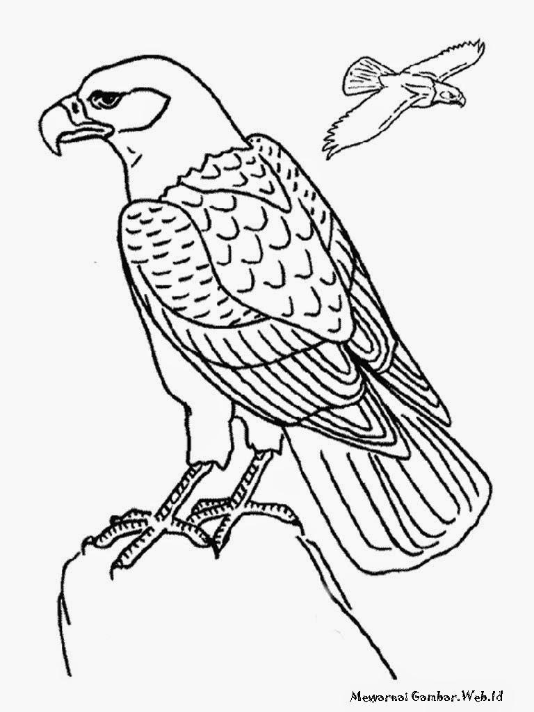 98 Sketsa Gambar Burung Hantu Hitam Putih HD Terbaik