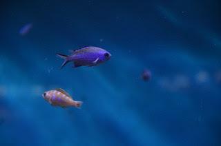 a_troubled_fish_by_ammarkov
