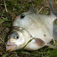Рыбалка в мае, ловля в мае, какую рыбу ловить в мае, таблица рыбака