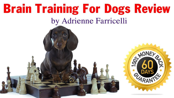 Brain Training For Dogs Review 2020 — Behaviour Training For Dogs Now Easy