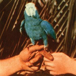 Resultado de imagen para andrew bird are you serious