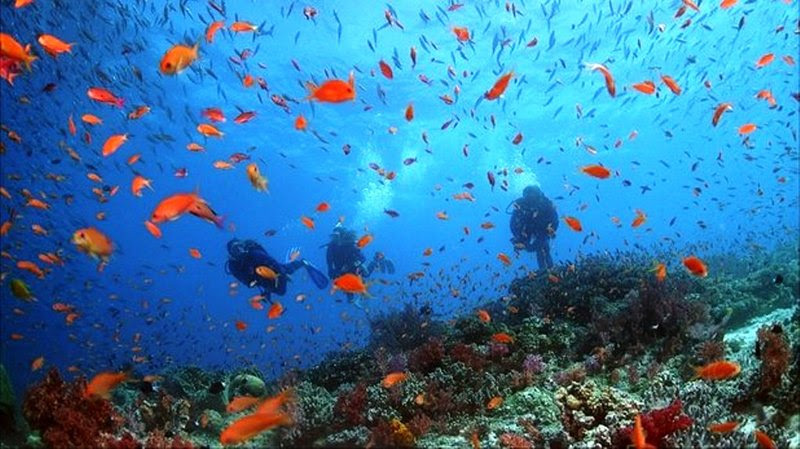 Coral Reef Adventure F