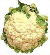 File:Cauliflower.JPG